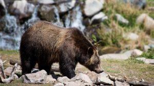 Ma rencontre avec un Ours